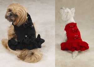 Stylish dog clothes