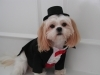 Tuxedo dog clothes