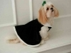evergreen velvet luxury dog apparel
