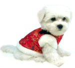 Red Chinese Silk dog vest