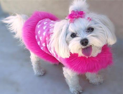 Pink dog vest